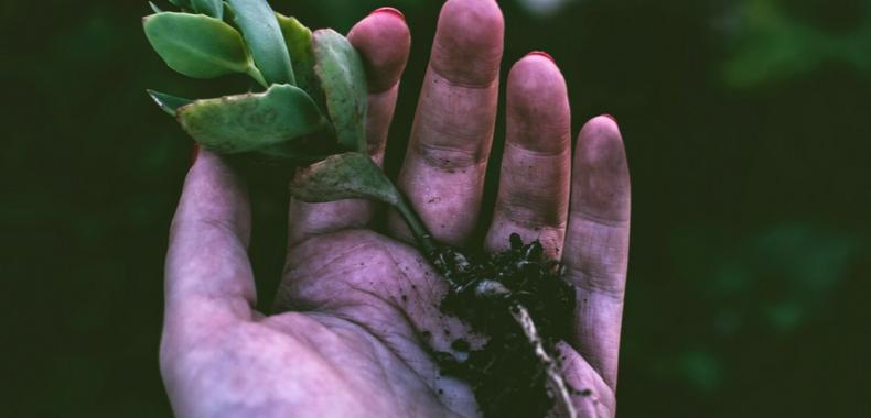 Cosmetica green piante