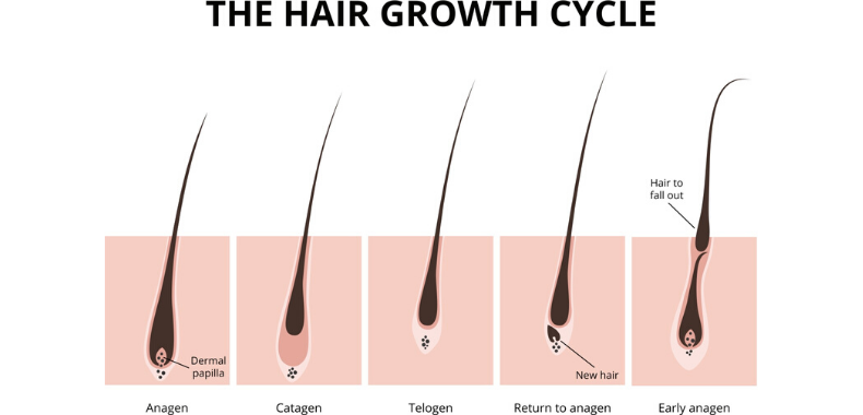 crescita-capelli-grafico