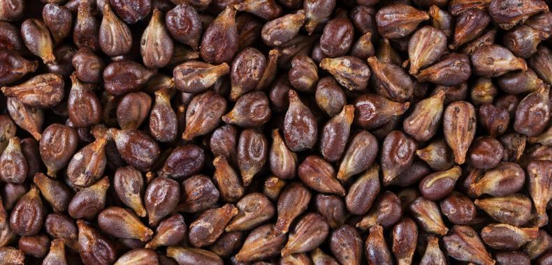semi-chicchi-uva