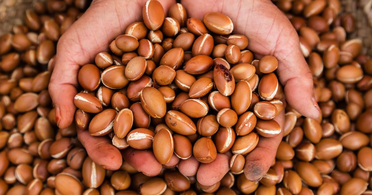 Le proprietà di bellezza dell'olio di argan: come usarlo su pelle e capelli
