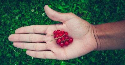 Le proprietà benefiche del ribes: dalla vitamina C al potere antiossidante